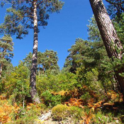 Bosques cantábricos
